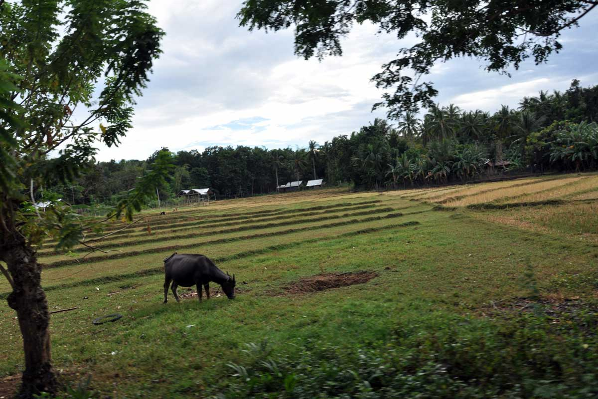 Island_divers_caluya_farming_field_DSC_0851
